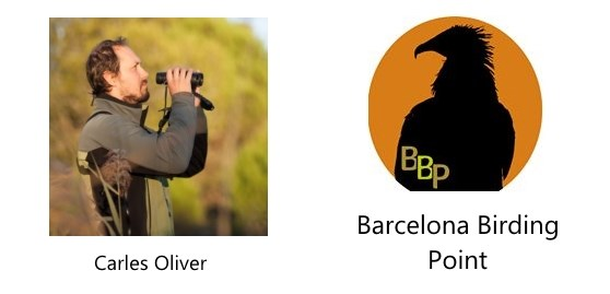 Barcelona Birding Point with Carles Oliver
