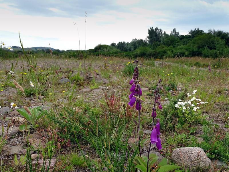 Plant life along riverbank