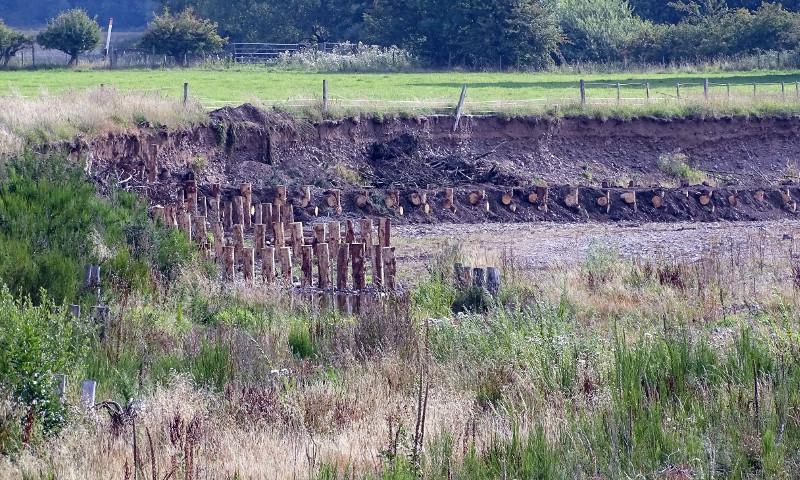 logs providing erosion control