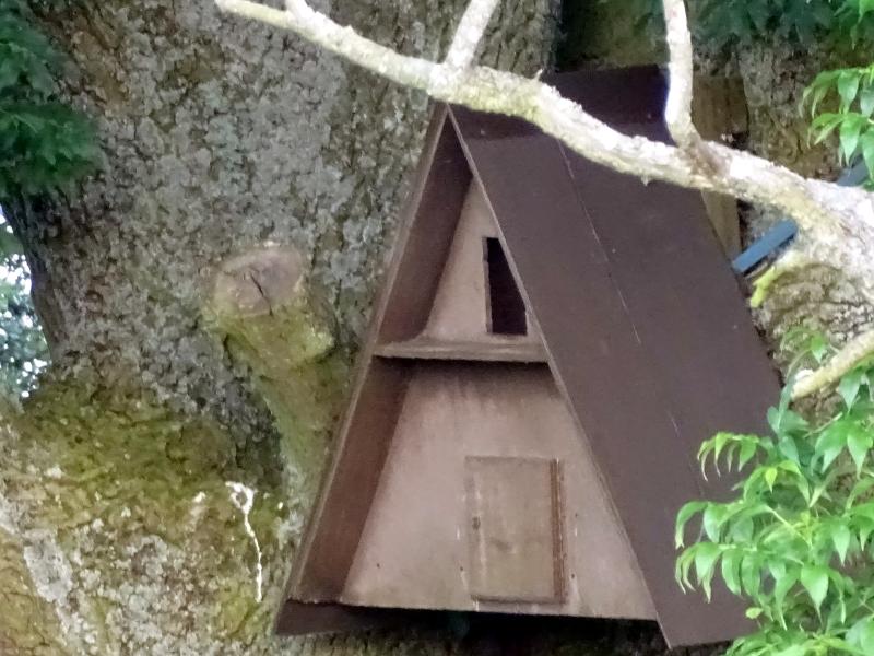 owl box in old oak tree