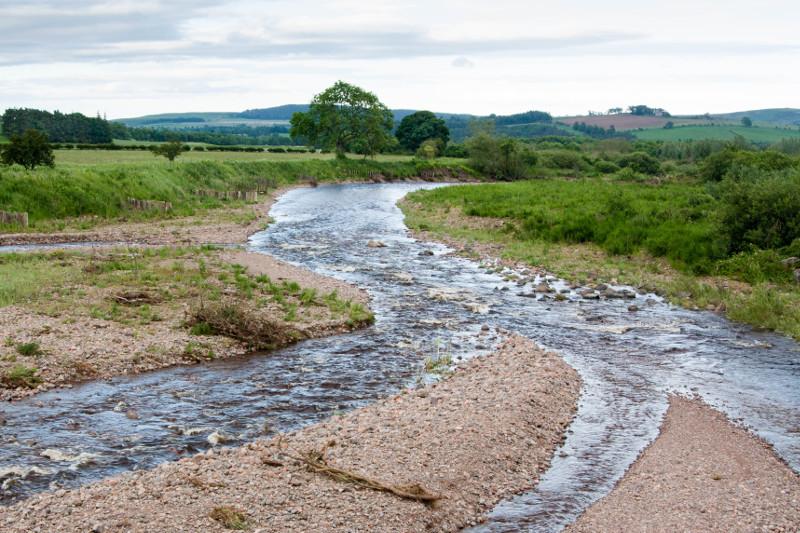 riverbank at Brandon Farm 29 Jun 2012