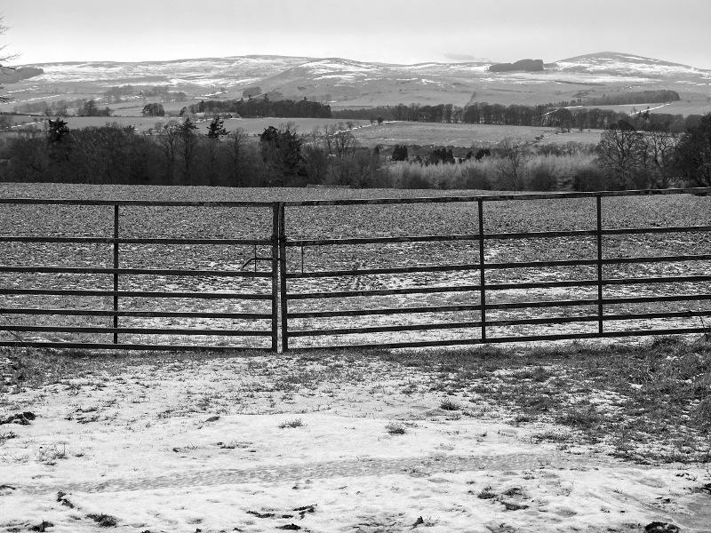 Cheviots gate DSC09022