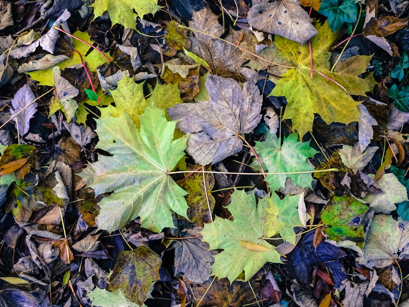 lying leaves