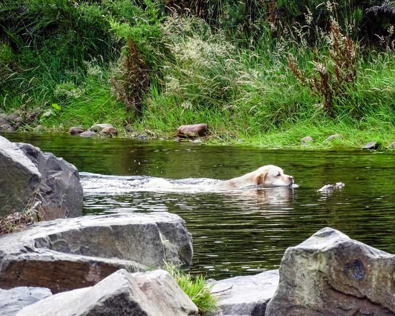 river dog 1