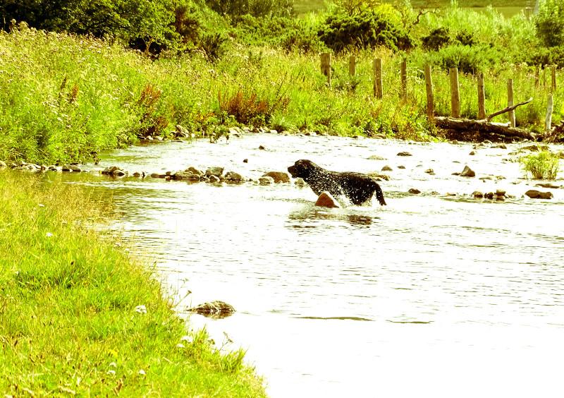 river labrador 2