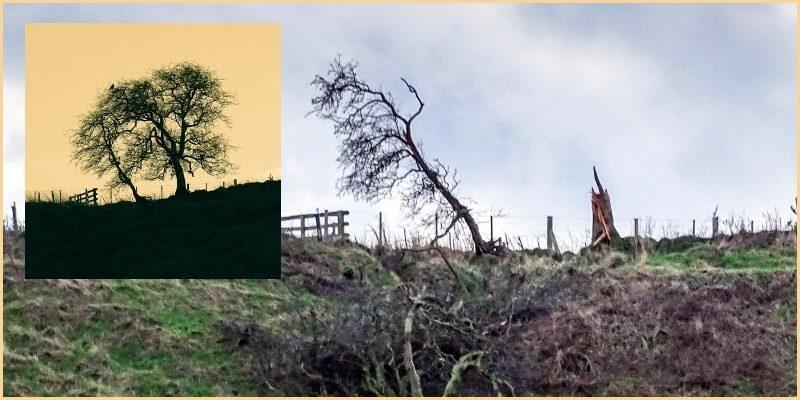 Desmond demolishes iconic view