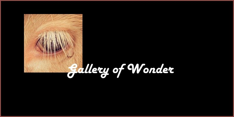 Gallery of Wonder on Tour video