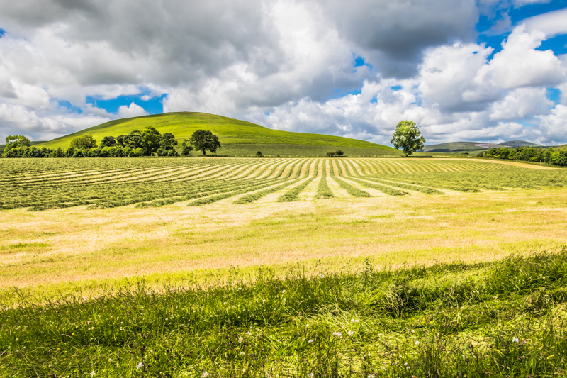 swaths of grass at East Hill
