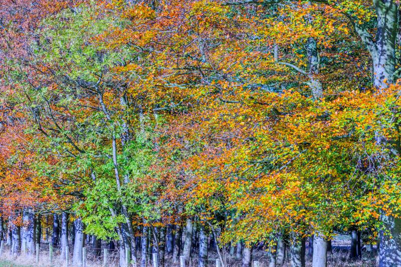breamish-valley-autumn-2
