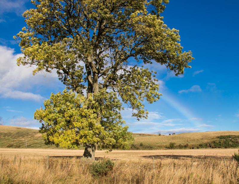 breamish-valley-autumn-3