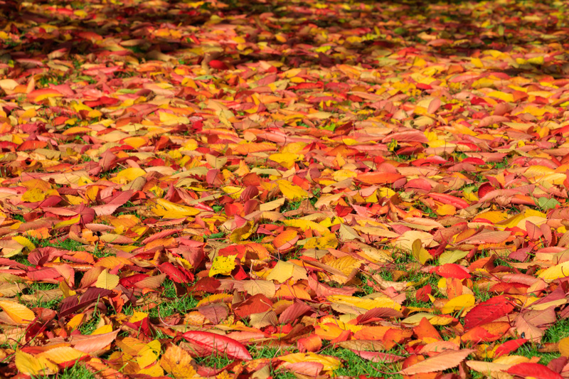 breamish-valley-autumn-6