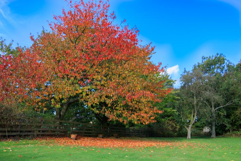 breamish-valley-autumn-7
