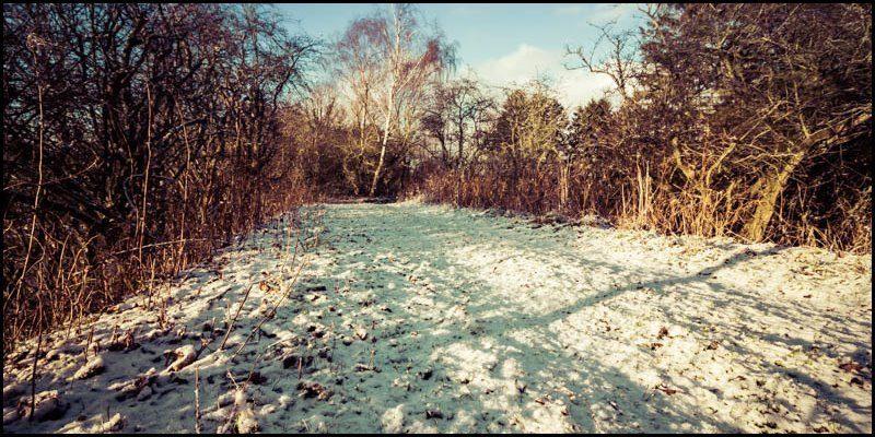 Snowy Dene