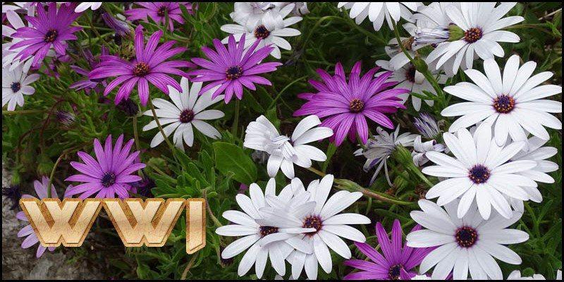 WWI gardeners