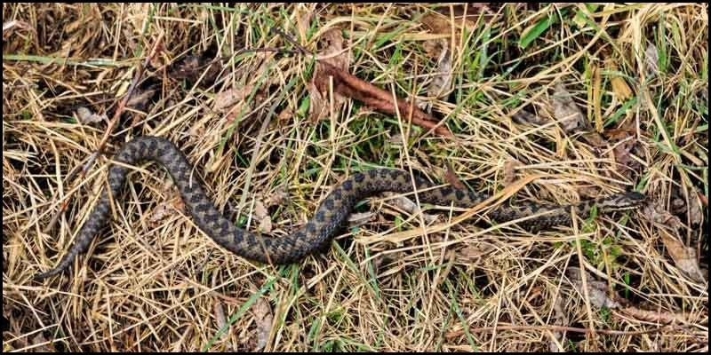Adders on the Sunny Side of the Street