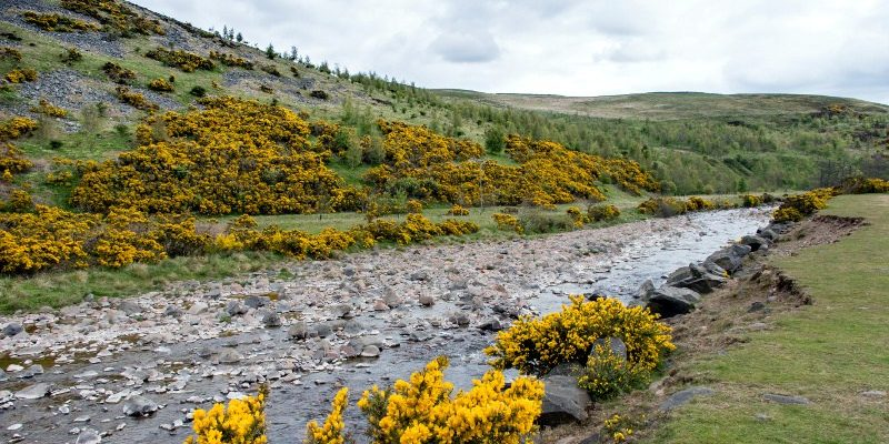 Along the River Breamish