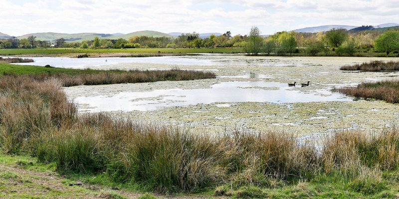 Hedgeley Lakes Spring 2016