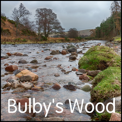 explore-Bulbys-Wood-badge