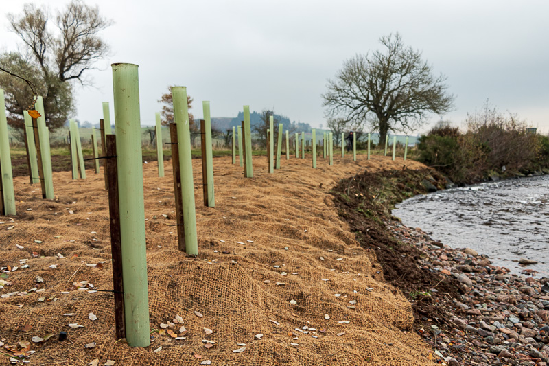 Geotextile mat and planting at Site 1