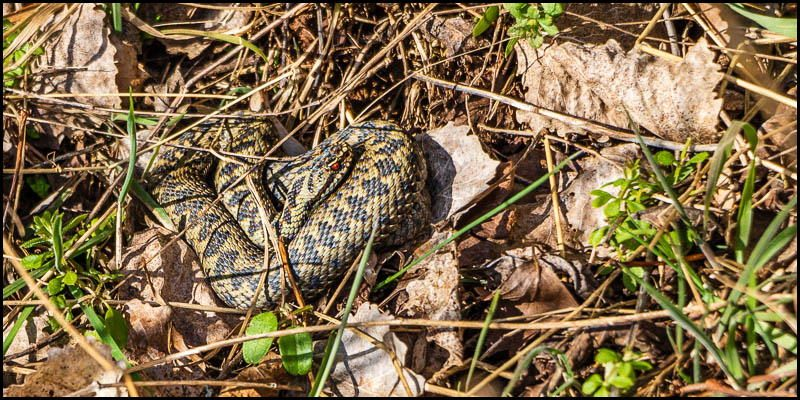 More Spring adders