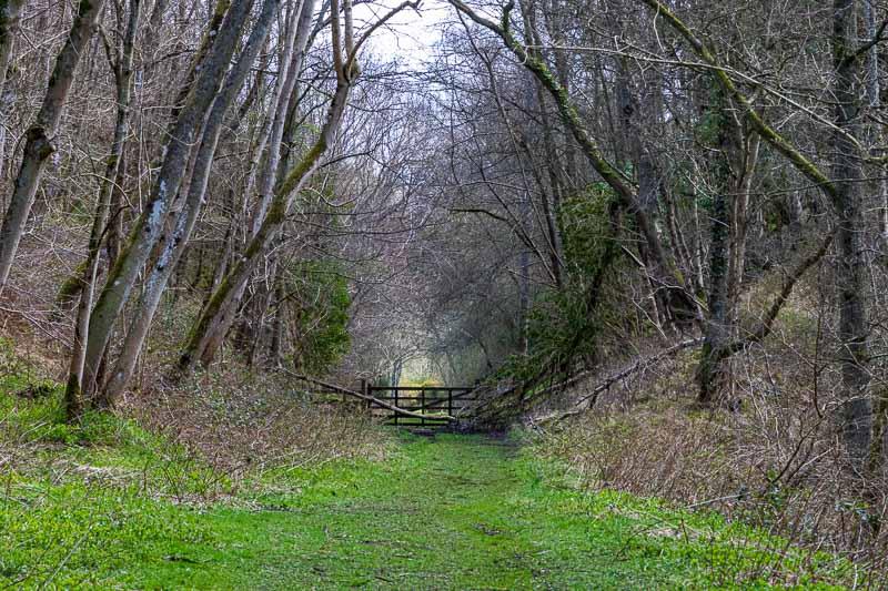 Crawley Dene (_P8A5267)