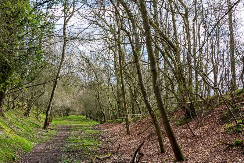 Crawley Dene (_P8A5307)