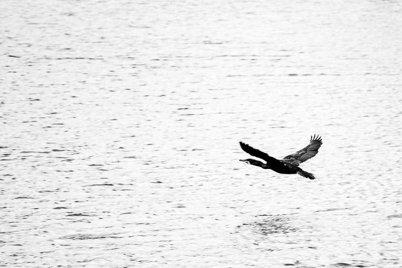 around the lake-5