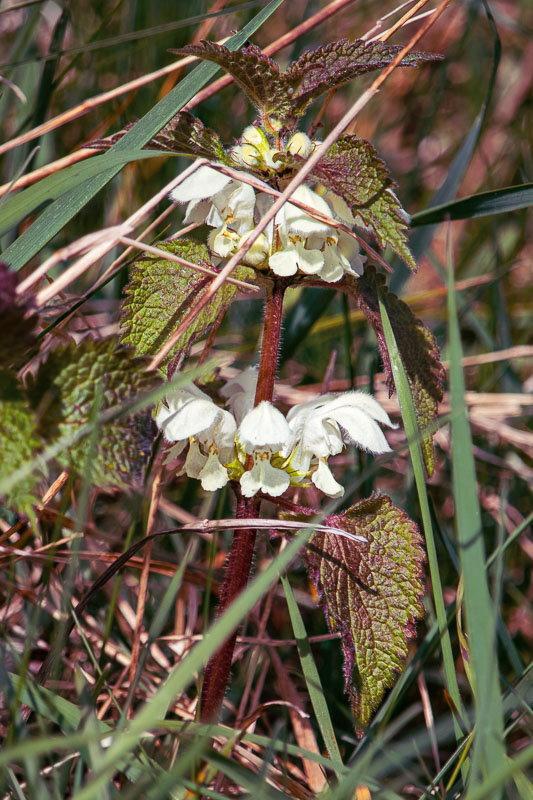 blooming valley flowers
