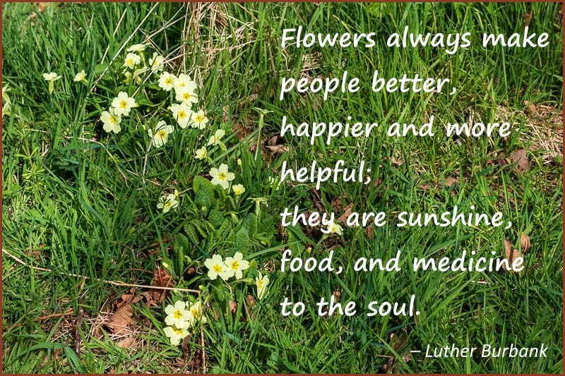 flowers always make people better quote