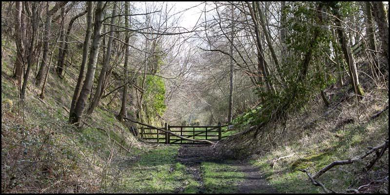 photo of Crawley Dene in Spring
