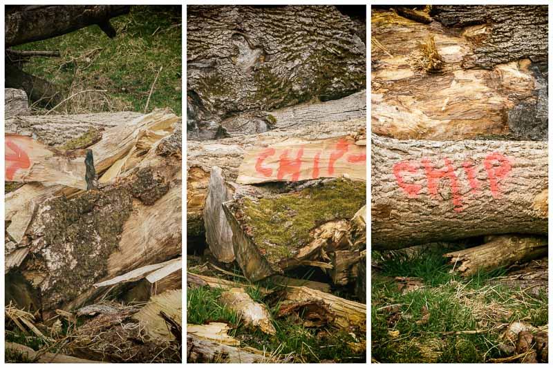 seeing again woodstack