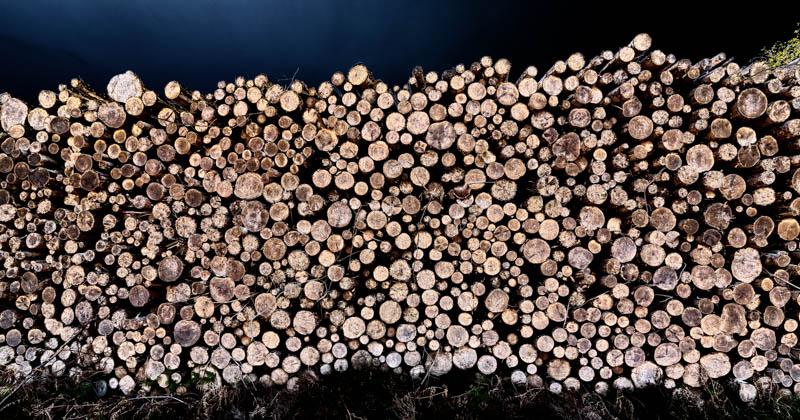 Beanley Wood woodstack