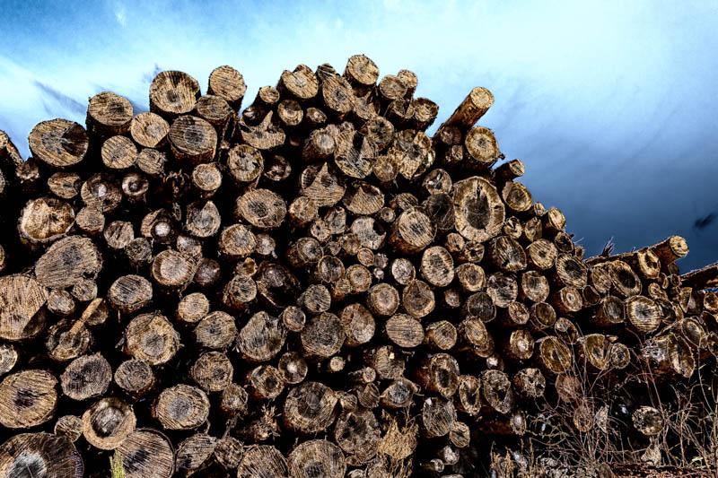 dramatic wood Beanley Wood