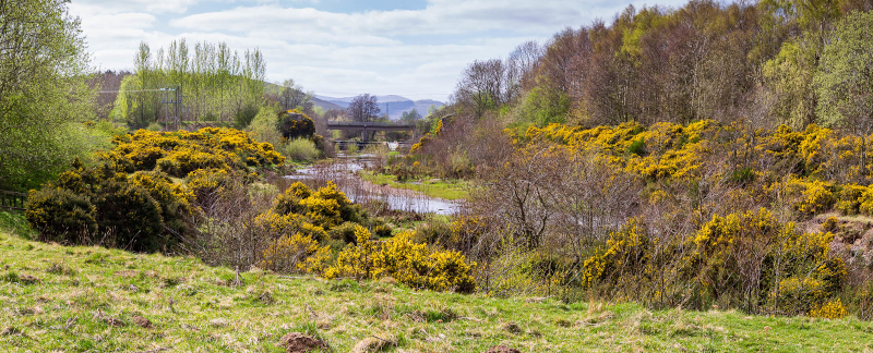 Stretch of gorse looking towards County Bridge