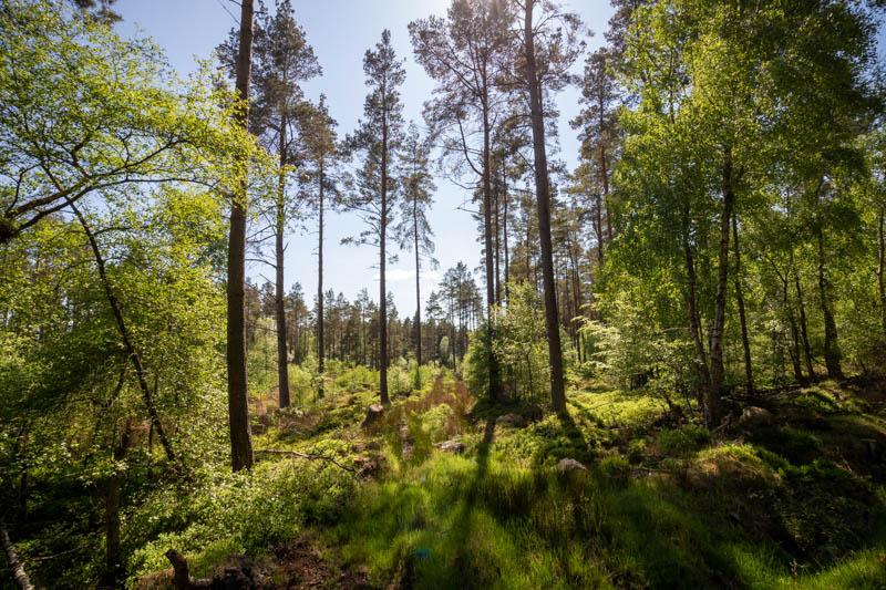 in Beanley Wood (1)