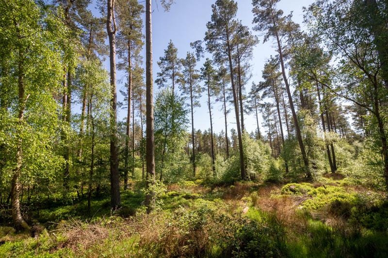 in Beanley Wood (2)