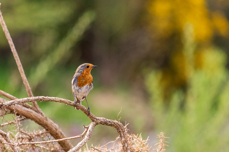 robin Breamish Valley