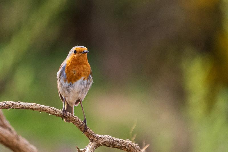 robin - chat