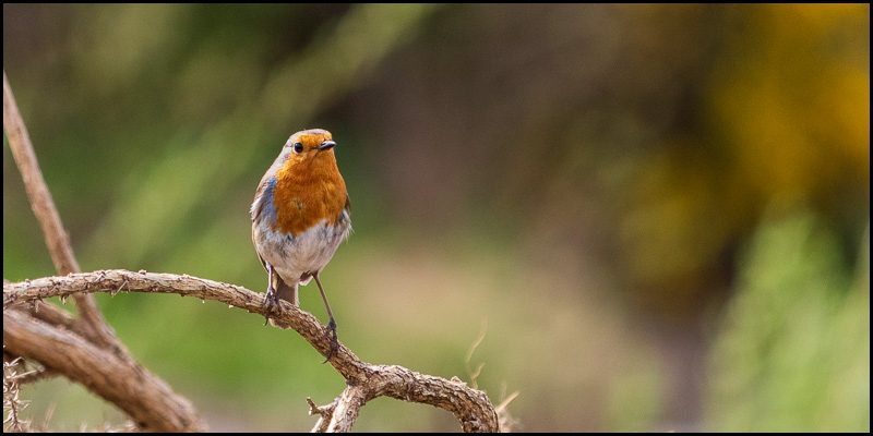 Some Little Birds