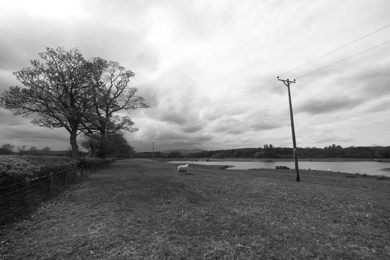 the furnished landscape 4 (5)