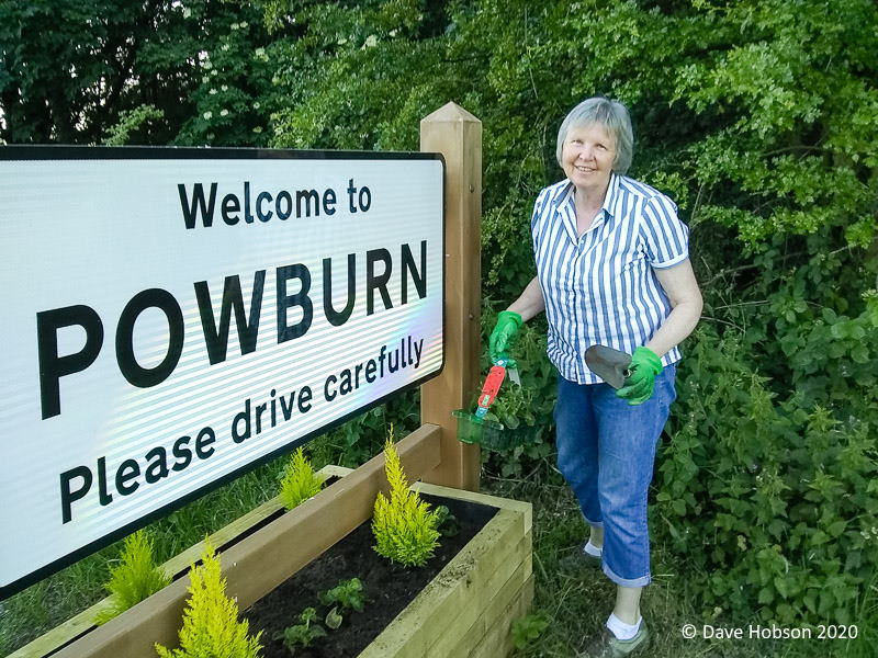 Frances Hobson planting north road sign planters on A697
