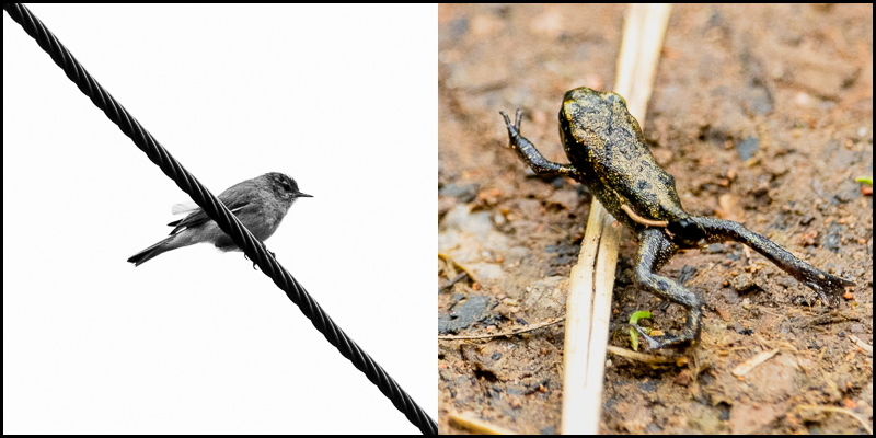 photo of bird on a wire and a frog on the floor