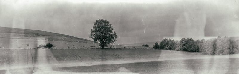 still old oak panorama