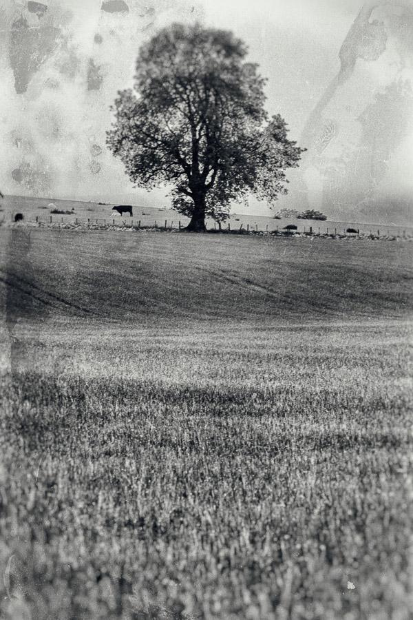 still old oak portrait
