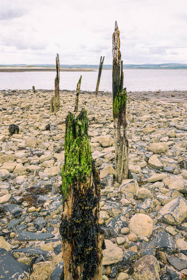 Series of wooden staithes at Holy Island