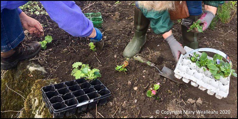 Plough Planting