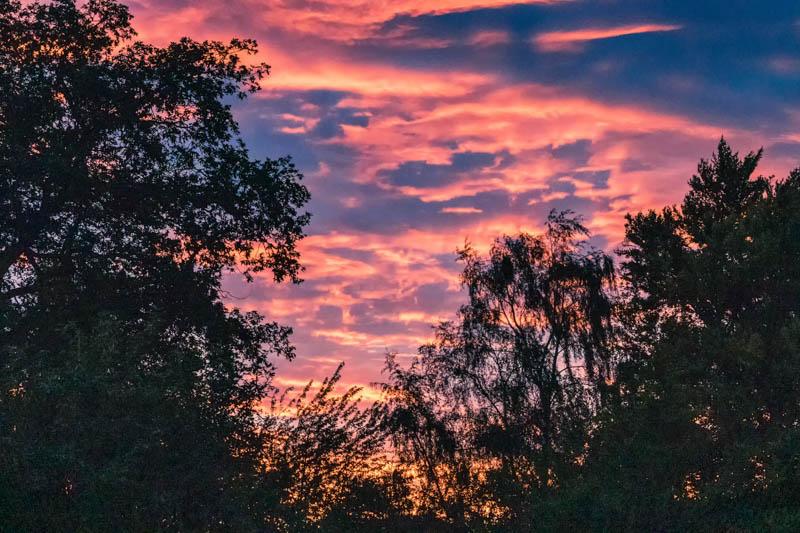 Summer sunset seen through trees