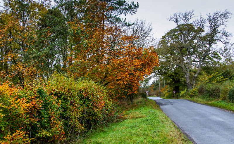Country lane back to Powburn