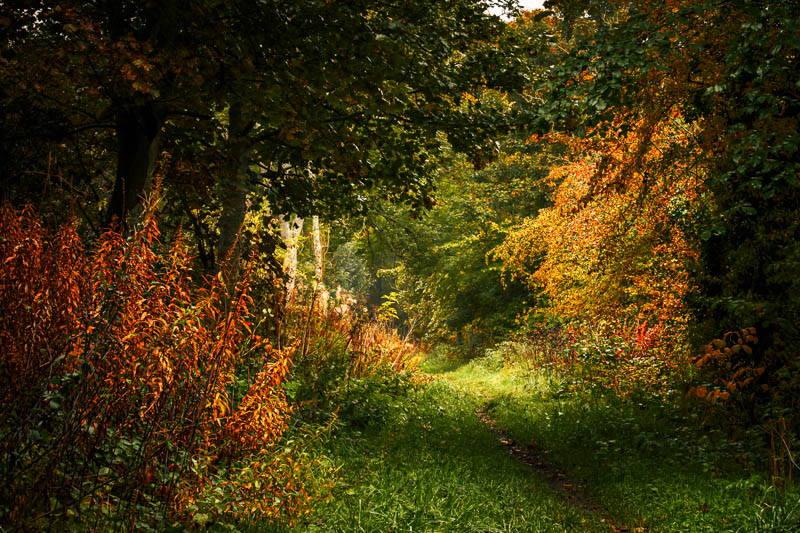 Autumnal vegetation along Crawley Dene