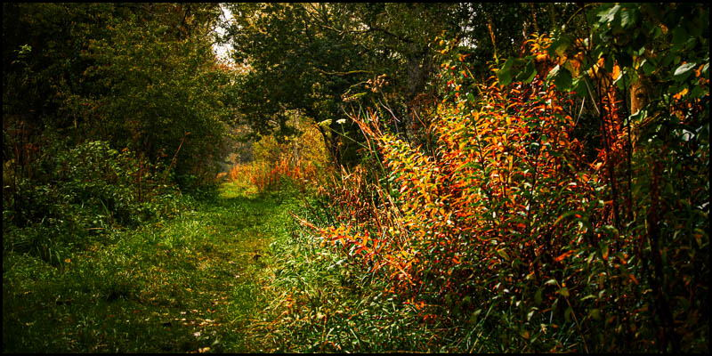 Photo of Crawley Dene in autumn colour